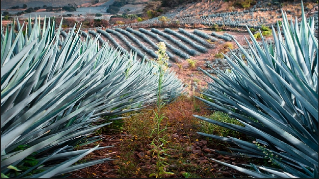Tequila Trail Tour
